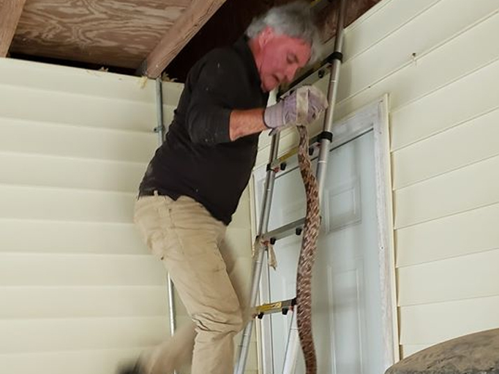 man stepping down a ladder against the side of a house with a snake in his hand